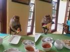 Com filhote abraçado, macaca ataca mesa na hora do almoço no Sri Lanka
