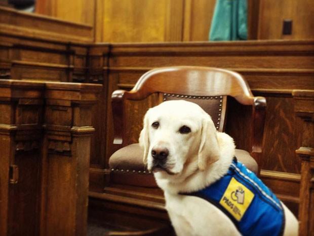 Organização americana treina cães para darem suporte emocional às vítimas de crimes violentos, principalmente crianças (Foto: Reprodução/Facebook/Courthouse Dogs Foundation)