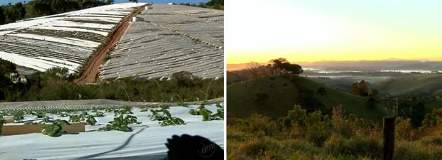 Produtores cobrem plantação de morangos para evitar prejuízos com a geada (Foto: Reprodução EPTV)