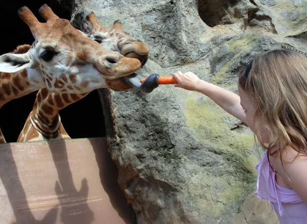 Jardim Zoológico de Taronga (Foto: Reprodução)