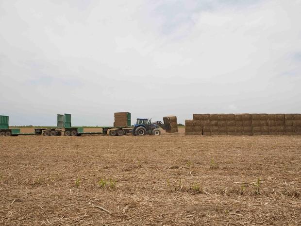 Todo o processo de produção de etanol da segunda geração é feito de forma mecanizada (Foto: Cortesia/ GranBio)