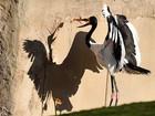 Cegonha parece brigar contra a própria sombra em zoo alemão