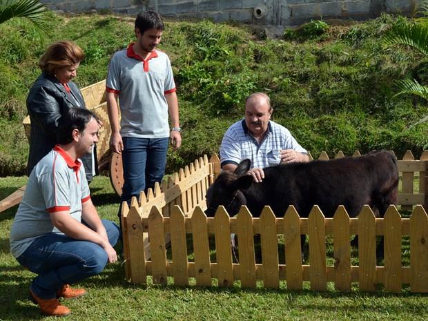 Família Oliveira ao lado da mini vaca Princesinha, de 60 centímetros (Foto: Samantha Silva / G1)