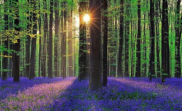 Floresta roxa (Foto: Reprodução/Nômades Digitais)