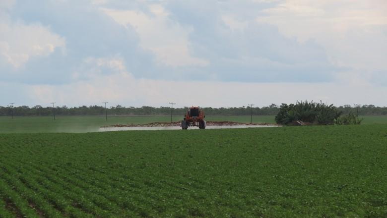agricultura_soja_defensivos (Foto: Teresa Raquel Bastos/ Editora Globo)