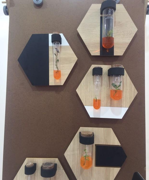 Módulo de madeira com muda em vitro da Vitafiore (Foto: Casa e Jardim)