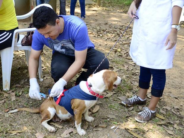 Em abril, mais de 3 mil animais da zona rural foram imunizados contra a raiva (Foto: Fagner Delgado/Arquivo pessoal)