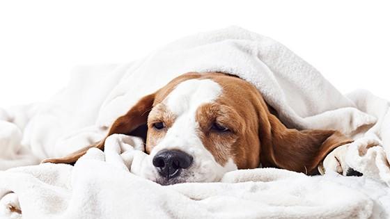 Cachorro  (Foto: thinkstockphotos)