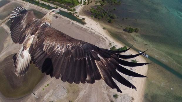 Imagem campeã do concurso de melhor foto tirada por drone, promovida pelo site 'Dronestagram', mostra águia sobrevoando o Parque Nacional Bail Barat, na Indonésia. (Foto: Divulgação/Dronestagram)