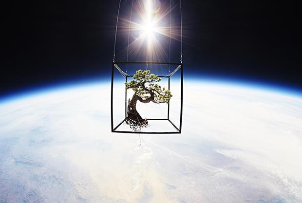 Flores no espaço 2 (Foto: Divulgação)