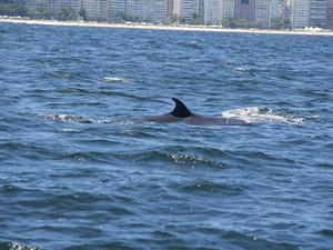 Animais buscam costa carioca para se alimentar no verão (Foto: José Laílson/ Divulgação)