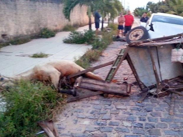 Cavalo teve ferimento profundo e será sacrificado no RN (Foto: Reginaldo Bezerra)