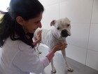 Uso de protetor para animais ganha força (Gabriel Gonçalves / G1)