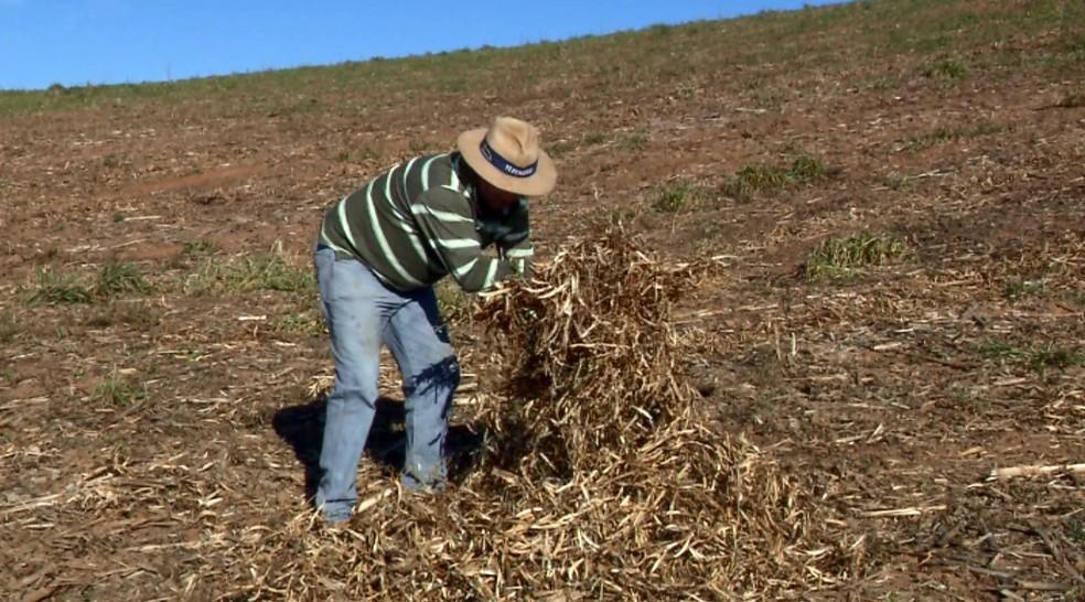 * Caraúbas fora: Garantia-Safra é liberado para agricultores de 24 cidades do RN.