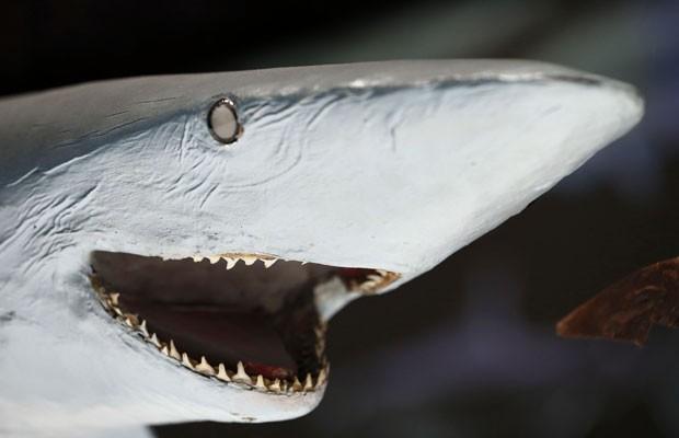 Museu Oceanográfico de Mônaco exibe um tubarão-azul empalhado que parece sorrir (Foto: Valery Hache/AFP)