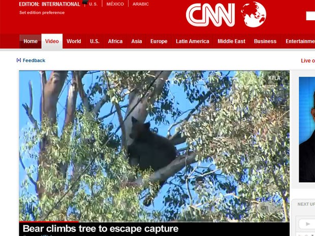 Imagens da rede de TV CNN mostram o urso em cima da árvore, na Califórnia (Foto: Reprodução)