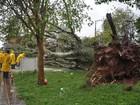 Temporal derruba árvore de grande porte em Palmeira das Missões, RS