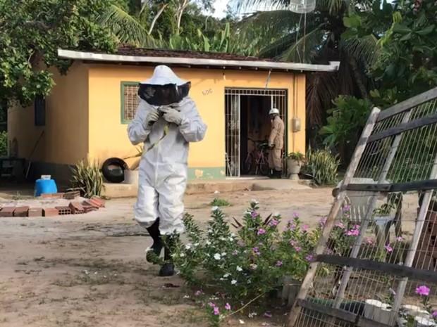 Bombeiros tentam controlar enxame de abelhas que atacou mulher em Jaguaribe, João Pessoa (Foto: Walter Paparazzo/G1)