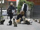 Presença de gatos gera polêmica em parque na capital do Peru