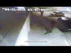 Bandidos invadem casa de policial reformado e roubam carros; vídeo