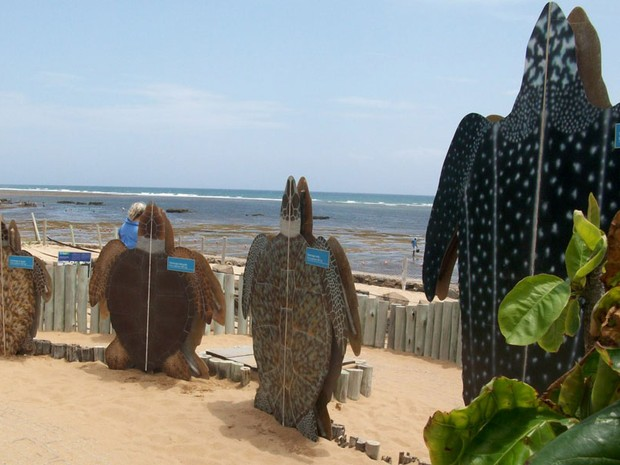Praia do Forte (Foto: Ida Sandes/G1)