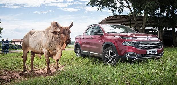 Fiat Toro encontra touro Agressivo (Foto: Fabio Aro/Autoesporte)