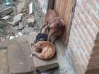 Cachorros em estado de desnutrição são resgatados no sudoeste da Bahia