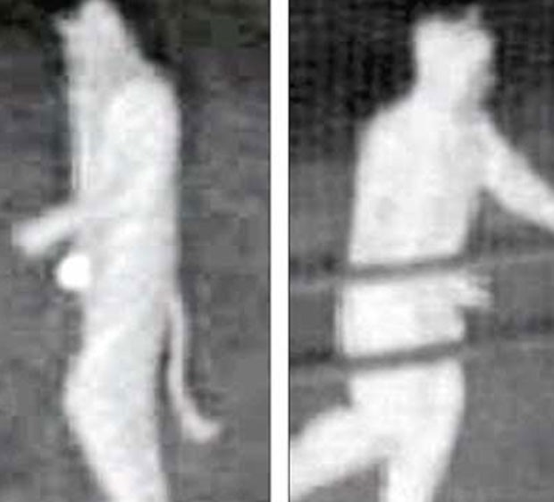 Suspeitos usavam fantasias de gato. (Foto: Reprodução)
