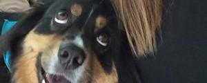 Cão que só tem 'olhos para a dona' é sensação (Reprodução/Reddit/Alliemarie10)