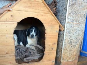 Com 10 anos e cega a cadela Isa vive na ONG em Piracicaba (Foto: Fernanda Zanetti/G1)