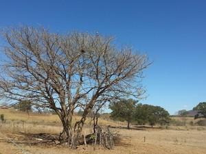 Norte de Minas Gerais se recupera da prior seca dos últimos 40 anos (Foto: Nicole Melhado / G1)