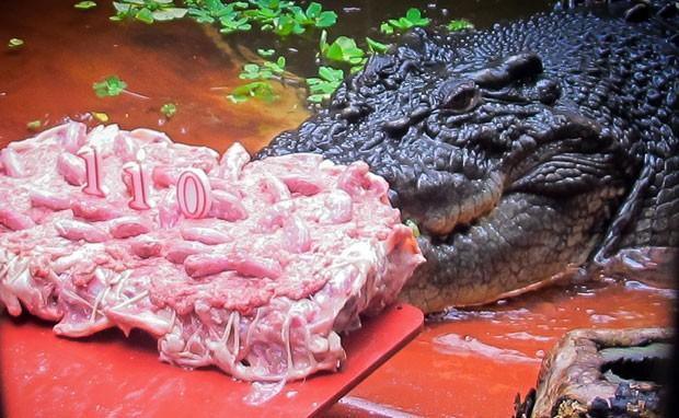 Maior crocodilo do mundo, 'Cassius' faz 110 anos e ganha bolo na Austrália (Foto: Marineland Melanesia/AFP)