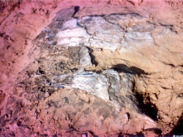 1º fóssil está em exposição em Marília (Foto: Willian Nava / arquivo pessoal)