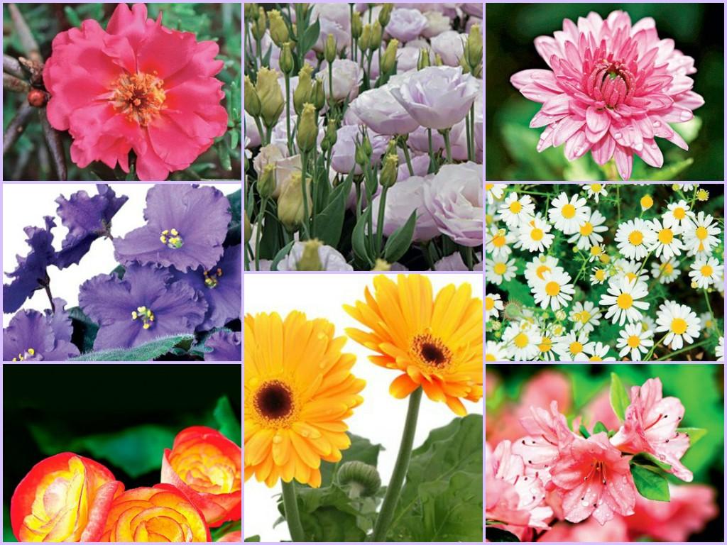 que podem ser cultivadas na sua casa, em vasos, jardins ou canteiros