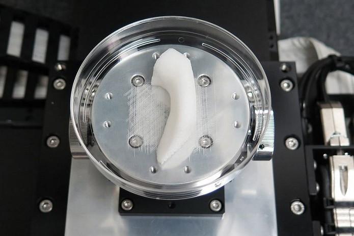 Parte do osso de uma mandíbula (Foto: Divulgação/Orelha humana feita com impressora 3D (Foto: Divulgação/Wake Forest Institute for Regenerative Medicine) )