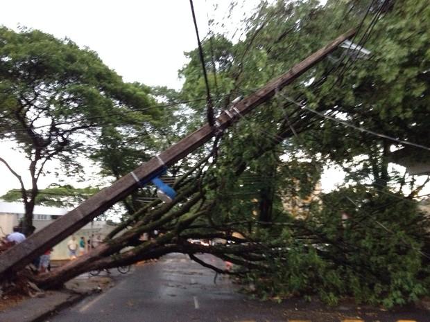 Ventos de 90 km/h derrubaram várias árvores em Maringá. (Foto: Solange Riuzim/RPC TV)