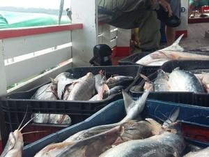 2,5 toneladas de mapará foram apreendidas (Foto: ICMBio em Santarém/Divulgação)
