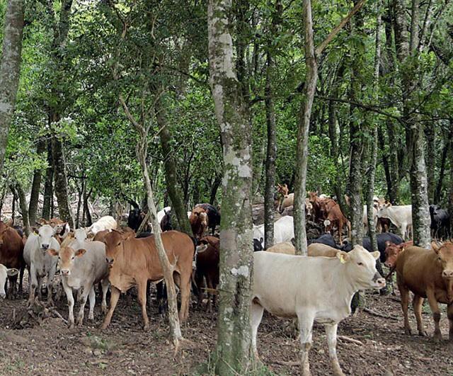 fazenda-sustentavel-agosto (Foto: Reprodução)