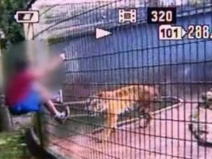 Menino teve o braõ dilacerado por tigre em zoológico de Casacavel (Foto: Reprodução / RPC TV)