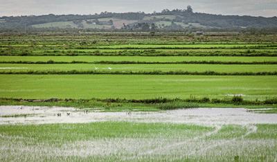 arroz-edicao-376-fevereiro-2017 (Foto:  )