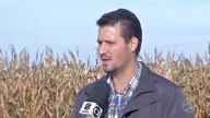 Especialistas aponta que geadas causaram pouco impacto no milho