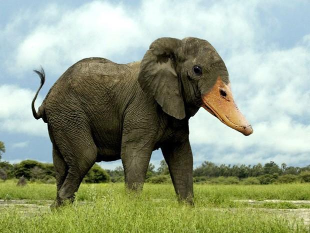 Usuários alteraram imagens de diferentes bichos para criar animais 'híbridos' (Foto: Reprodução)