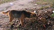 Homem e filhote de cão morrem baleados (Ive Rylo/G1 AM)