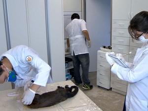 Pesquisadores da Ufes estudando macaco morto  (Foto: Reprodução/ TV Gazeta)