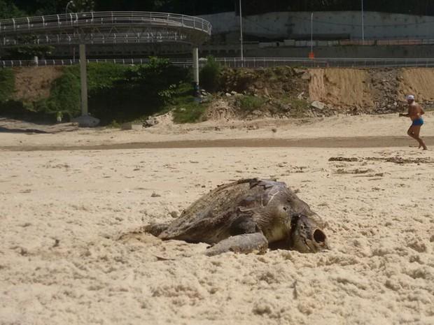 Ao longo do mês de março, três tartarugas foram encontradas mortas na orla do Rio (Foto: Marcello Farias/ Salvemos São Conrado)