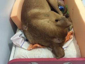 Cachorro teria sido espancado na região da cabeça (Foto: Victor Hugo Fernandes / Arquivo Pessoal)