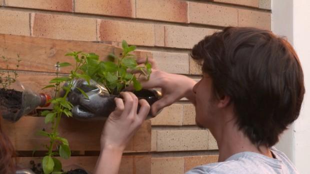 Como fazer a horta vertical (Foto: Reprodução)
