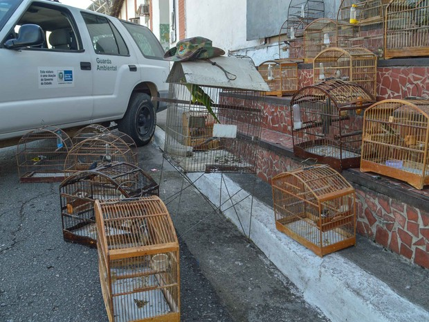 Aves são apreendidas em Barra Mansa, RJ. (Foto: Sergio Fortuna/ Divulgação PMBM)