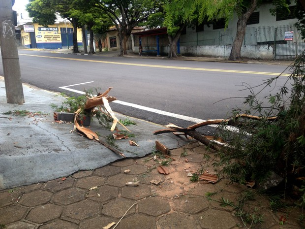 Acidente foi registrado na Avenida Brasil, em Presidente Prudente (Foto: Heloise Hamada/G1)