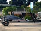 Tubarão de 600 kg é amarrado em reboque de picape nos EUA